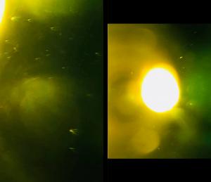 Hundreds-UFOs-from-Sun-3