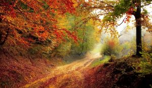 autum-nature-arbres