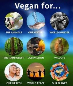 11828759_vegan