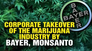 Monsanto-And-Bayer-Are-Moving-To-Create-A-Monopoly-On-Marijuana-bayer