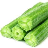moringa-oleifera-young-cosses