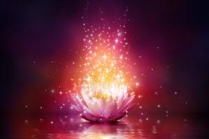 fleur-red-lotus