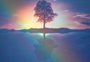 arbre-solstice-spiritual