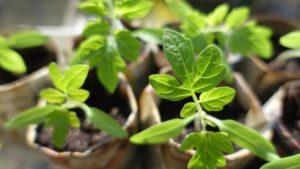 plantes-image
